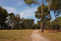 Photographs of Brownsea Island